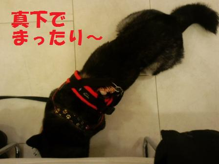 blog7337.jpg