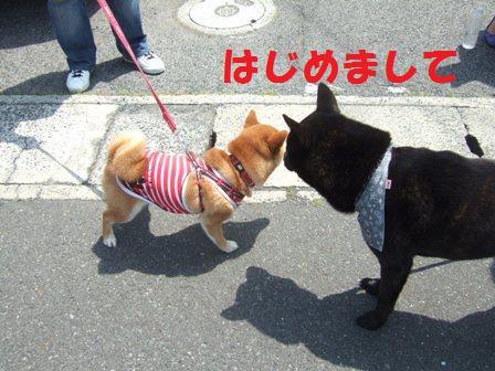 blog7339.jpg