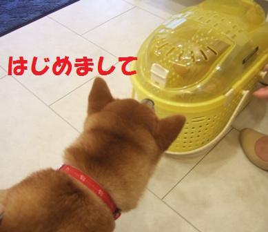 blog7403.jpg