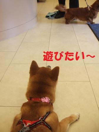 blog7407.jpg