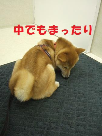 blog7411.jpg