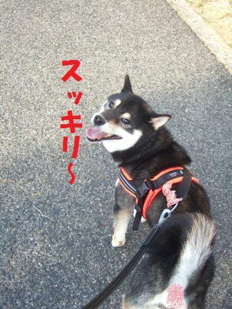 blog7414.jpg