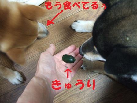blog7417.jpg