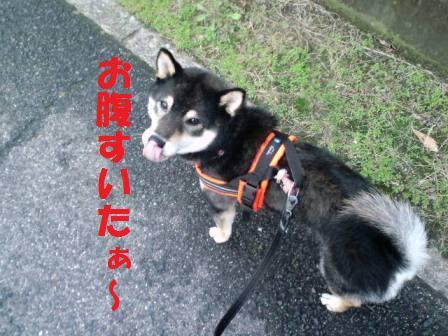 blog7426.jpg