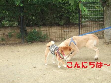 blog7427.jpg