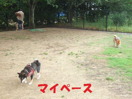 blog7429.jpg