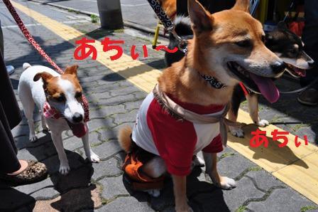 blog7461.jpg