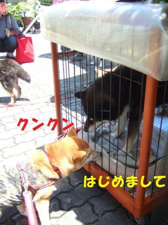 blog7473.jpg