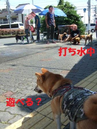 blog7482.jpg