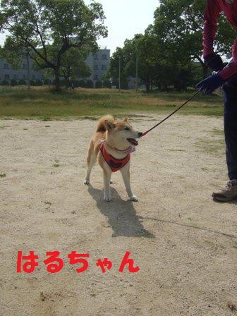 blog7508.jpg