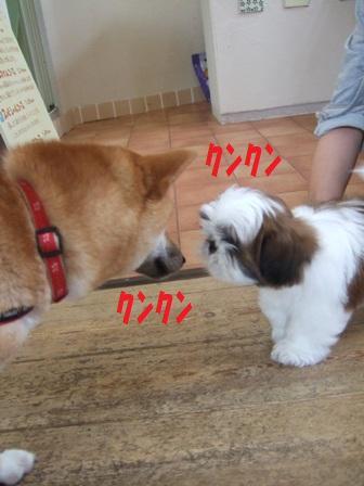 blog7541.jpg