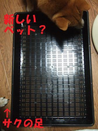 blog7556.jpg