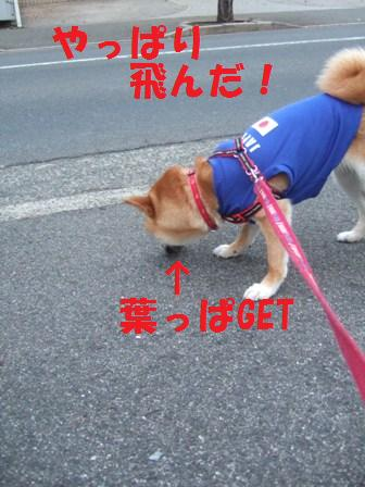 blog7567.jpg