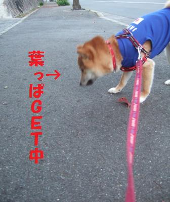 blog7570.jpg