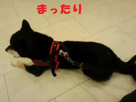 blog7611.jpg