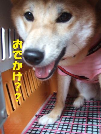 blog7626.jpg