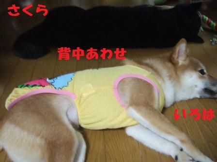 blog7883.jpg