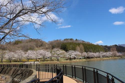 矢木羽湖4
