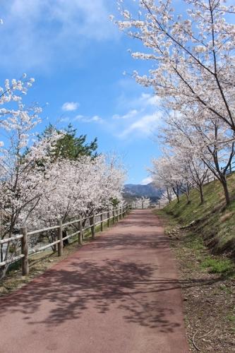 矢木羽湖10