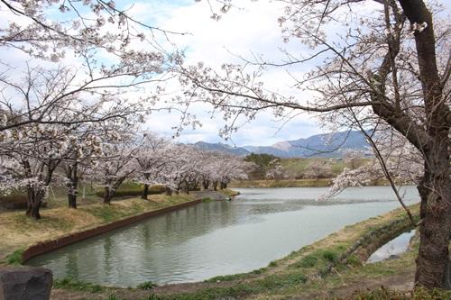 矢木羽湖13