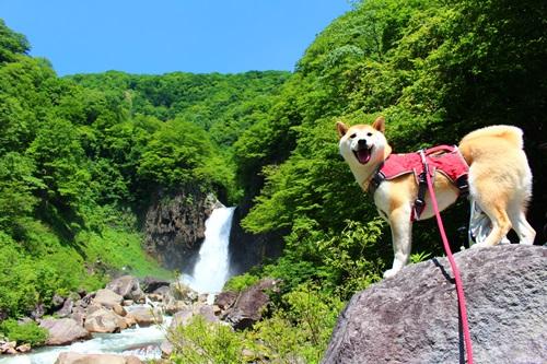 苗名滝10
