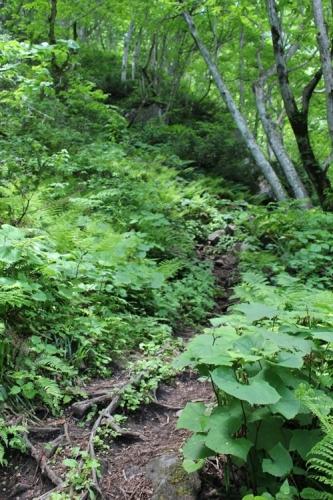 苗名滝15