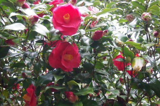 庭先の花 2 029_512