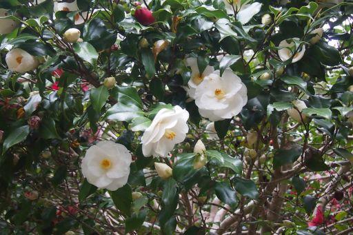 庭先の花 2 028_512