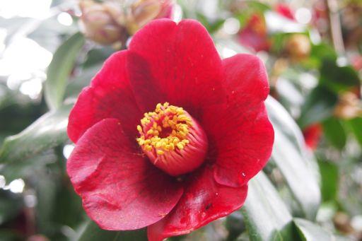 庭先の花 2 015_512