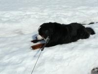 残る雪にへばりつく!