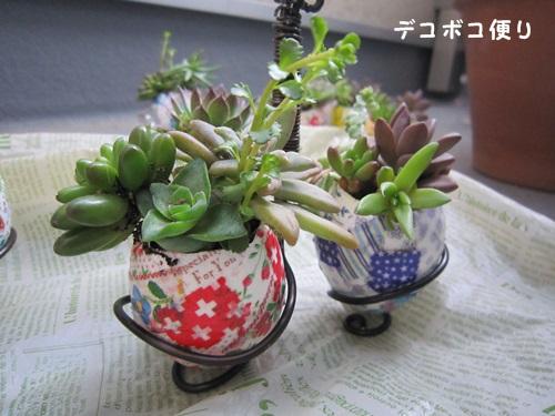 玉カラ寄せ植え2
