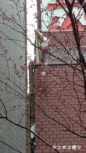 来年の桜を楽しみに…