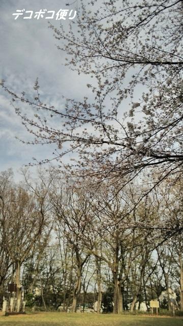 5分咲きの記念撮影