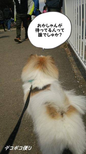 カワイイボーダー女子♪4
