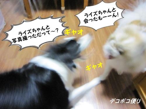 カワイイボーダー女子♪7