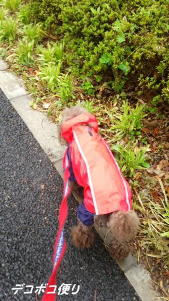 雨の日散歩と寄せ植え三昧♪4