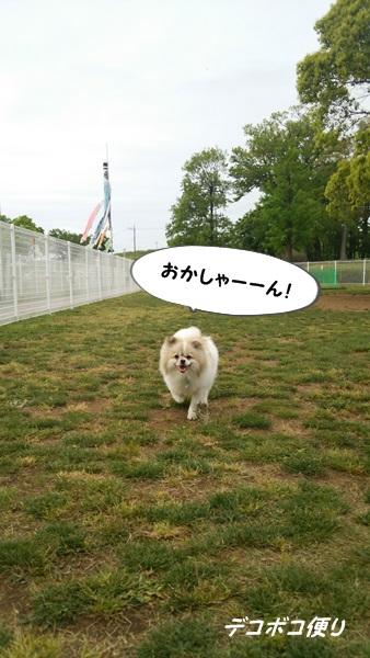 GW最終日のドッグラン~小型犬エリア編2