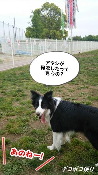 GW最終日のドッグラン~小型犬編9