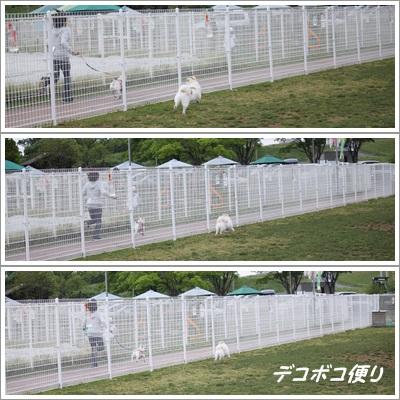 page-GW最終日のドッグラン~小型犬編6