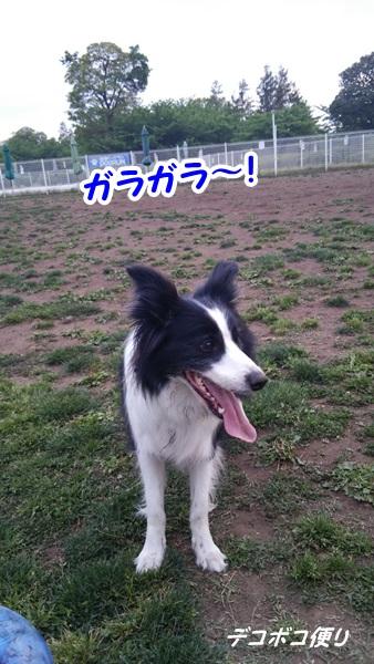 GW最終日のドッグラン~中型大型犬エリア1