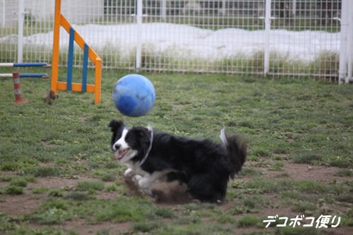 GW最終日のドッグラン~中型大型犬編3