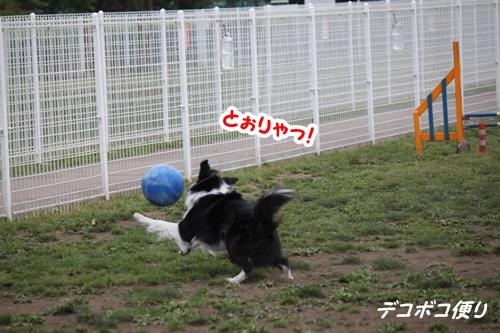 GW最終日のドッグラン~中型大型犬編4