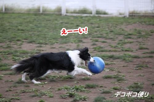 GW最終日のドッグラン~中型大型犬編5