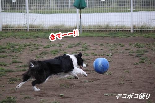GW最終日のドッグラン~中型大型犬編6
