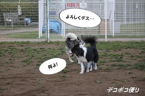 GW最終日のドッグラン~中型大型犬編7