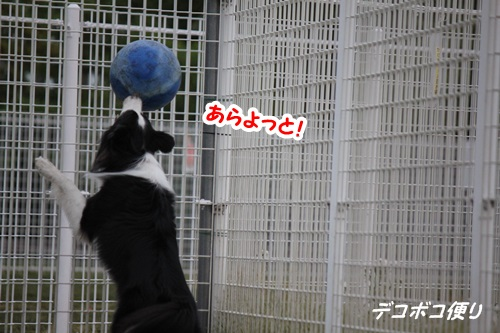 GW最終日のドッグラン~中型大型犬編9