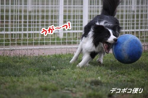 GW最終日のドッグラン~中型大型犬編10