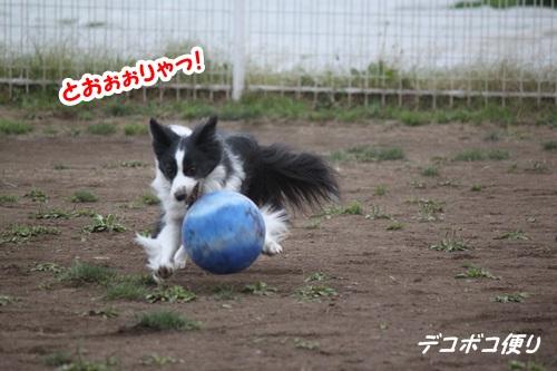 GW最終日のドッグラン~中型大型犬編11