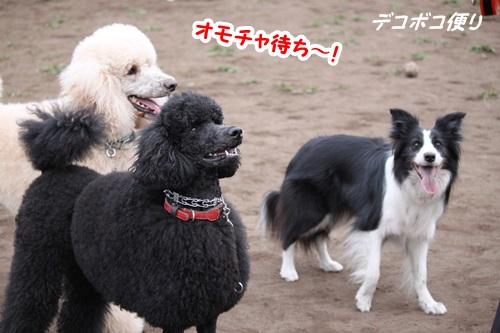 GW最終日のドッグラン~中型大型犬編15
