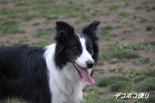 GW最終日のドッグラン~中型大型犬編17